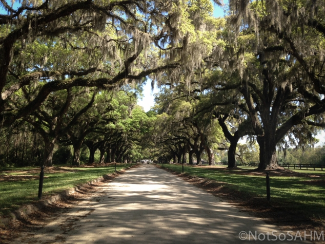 Live Oaks of Boone Hall