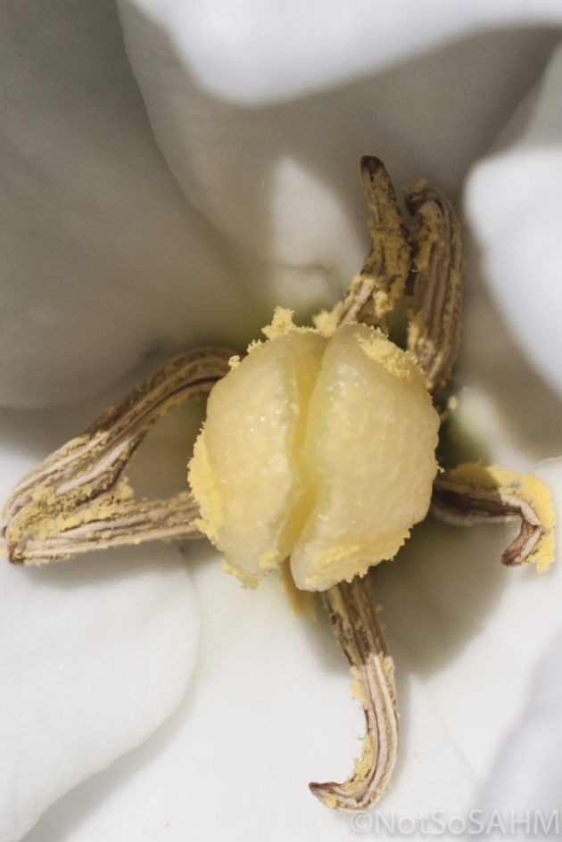 pistil and stamen of a 6-petal Gardenia