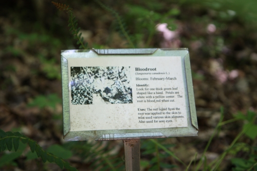 Bloodroot sign