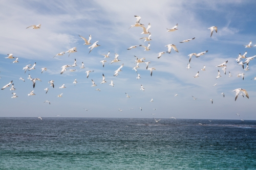 Birds fly around at Carmel River State Beach