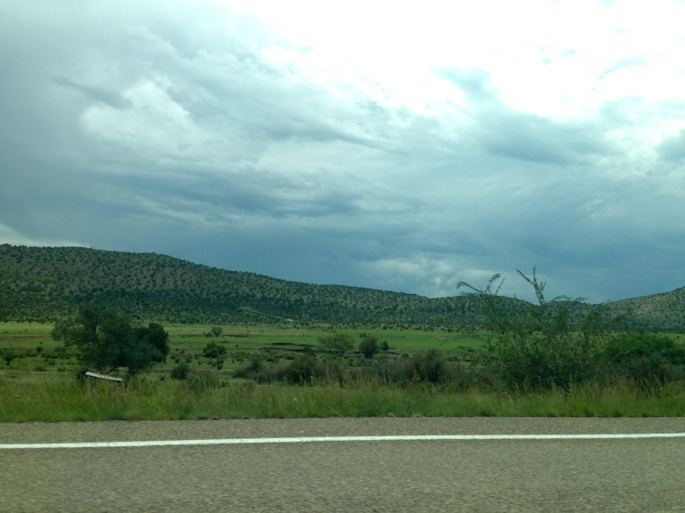 Green pasture in NM