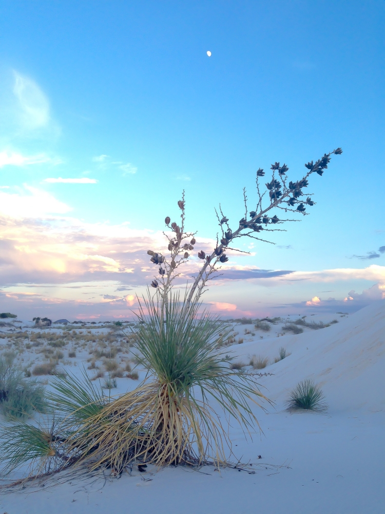 A plant at White Sands