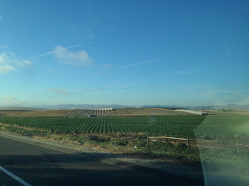 Farmland on the PCH