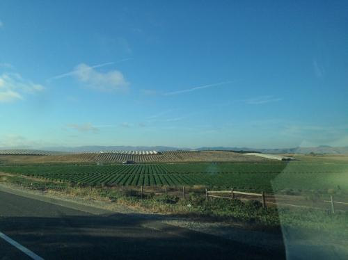 Farmland on the PCH