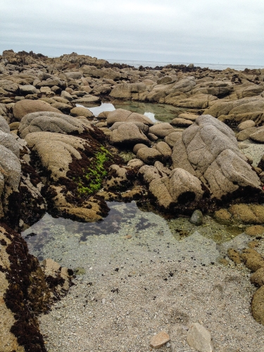 tide pools in Monterey