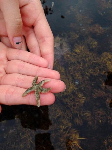 tiny star fish