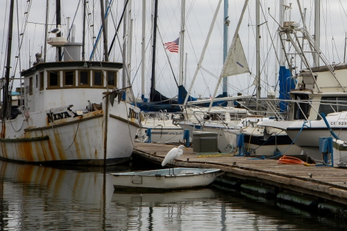 Birds and boats at Moss Landing in Monterey Bay  Not So SAHM