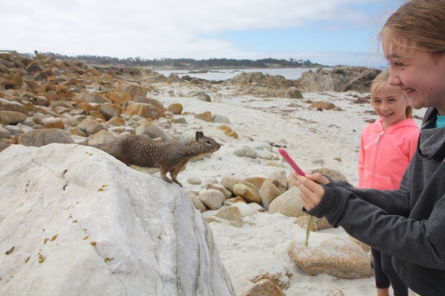 Friendly squirrel at Seal Point along 17 Mile Drive in Pebble Beach  Not So SAHM
