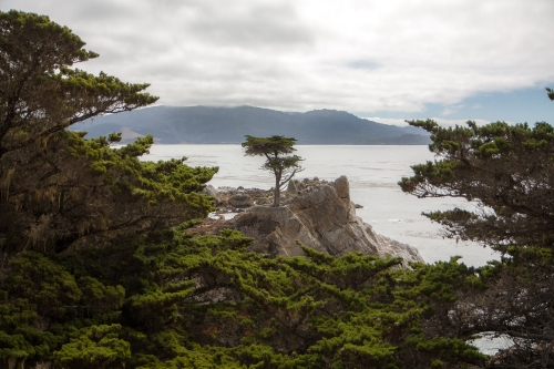The Lone Cypress along 17 Mile Drive in Pebble Beach  Not So SAHM