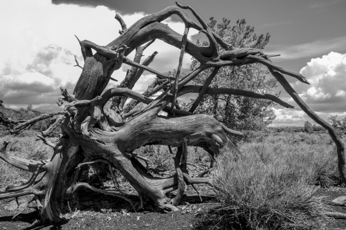 skeleton tree at Craters of the Moon Idaho Not So SAHM