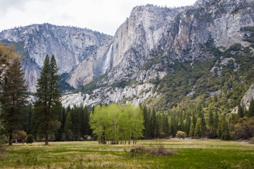 Yosemite Valley Meadow with waterfall Not So SAHM