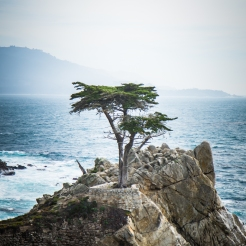 The Lone Cypress sits by itself on an outcropping of rock in the Pacific Ocean Not So SAHM
