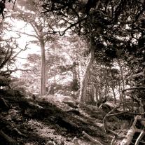 Creepy looking woods at Point Lobos Not So SAHM