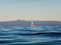 Sail boat on calm waters in Monterey Bay Not So SAHM