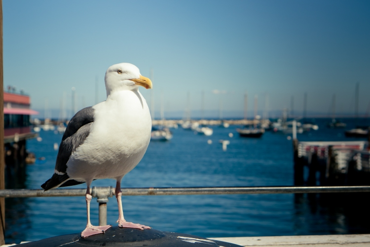 A seagull waits for food of any kind NotSoSAHM