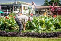 A man tends the public flower beds in the city center square in La Fortuna, Costa Rica NotSoSAHM