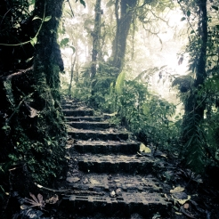 A pathway leads through the trees in the Monteverde Cloud Forest Reserve in Costa Rica NotSoSAHM