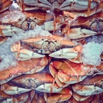 Crabs packed in ice waiting to be chosen and eaten in Monterey, California NotSoSAHM