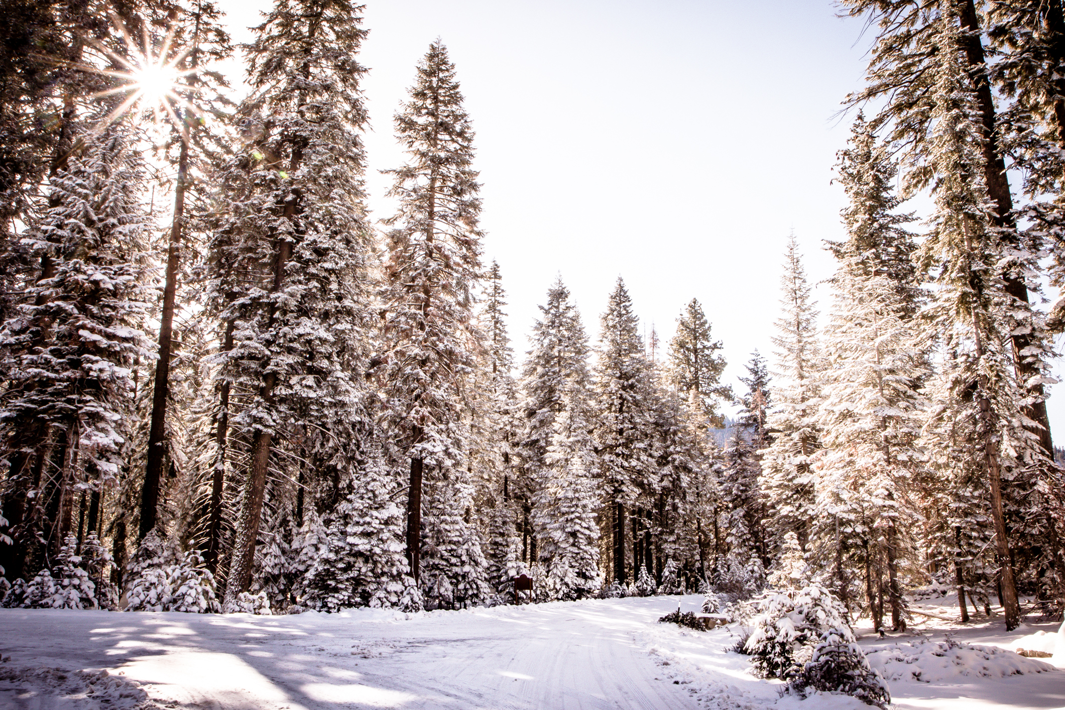 The sun peeks through pine trees covered in snow in Sequoia National Park NotSoSAHM