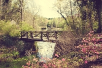 A small, wooden bridge over a lake in the serene woods around Biltmore, Asheville NC NotSoSAHM