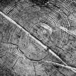 A tree trunk shows its rings and a couple scars NotSoSAHM