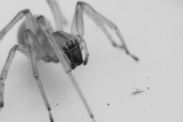 close-up view of a spider and its eyes NotSoSAHM