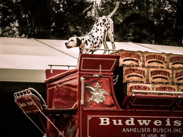 A dalmatian protects a delivery of Budweiser on a red cart NotSoSAHM