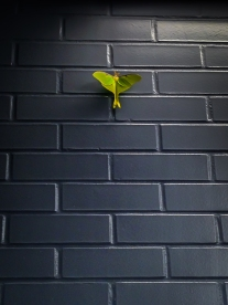 A green luna moth rests in contrast on a grey wall at a rest stop NotSoSAHM