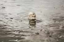 A metallic looking jellyfish stands on the sand near Wilmington, NC NotSoSAHM