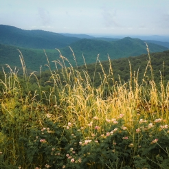 The Shenandoah Mountains stretch out beyond golden grass along Skyline Drive in Virginia Not So SAHM
