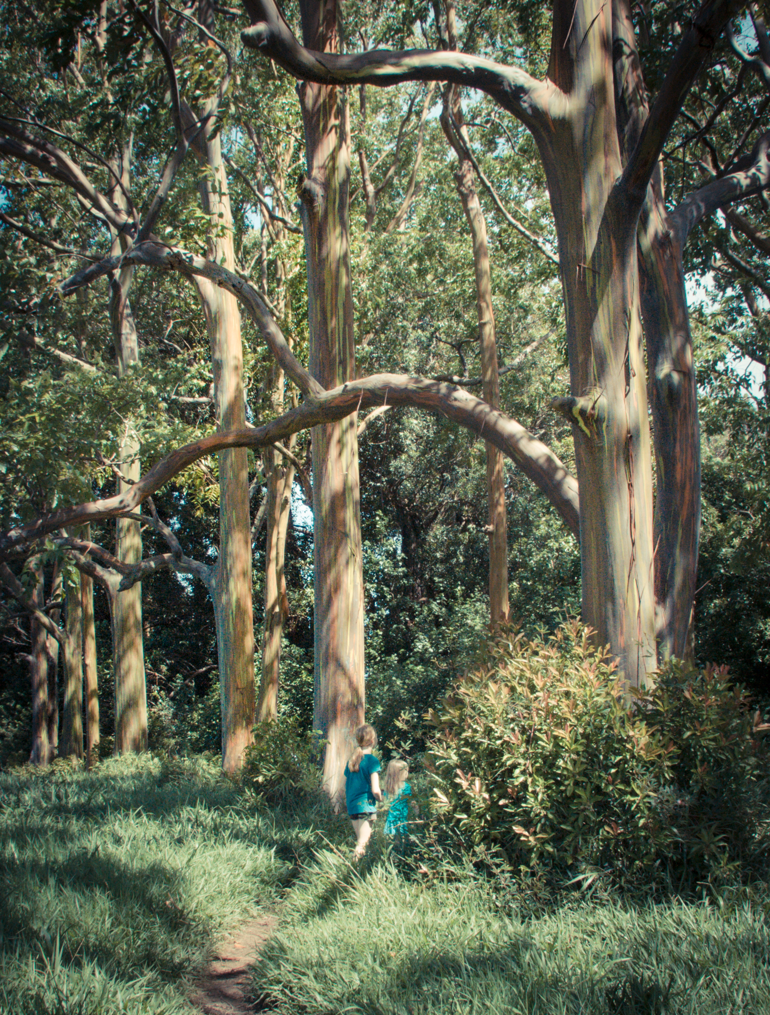 two girls stand amongst the tall painted eucalyptus trees in a grove on the Road to Hana in Maui Hawaii Not So SAHM