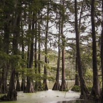 A small swamp with cypress trees in Wilmington, NC Not So SAHM