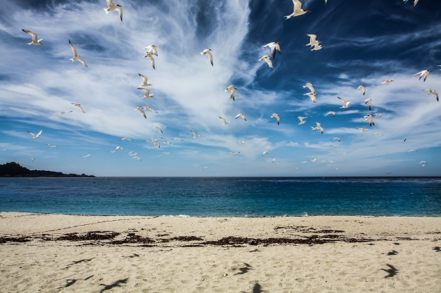 Seagulls fly over Carmel River State Beach. Not So SAHM