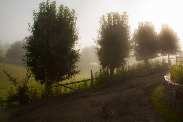 A tree-lined driveway is dreamy in the warm light of the sunrise. Not So SAHM
