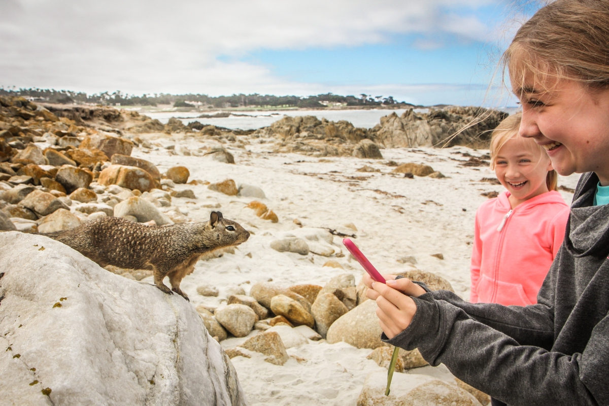 A squirrel type animal gets close enough to sniff a girl's cell phone at a beach along 17 Mile Drive in Pebble Beach. Not So SAHM