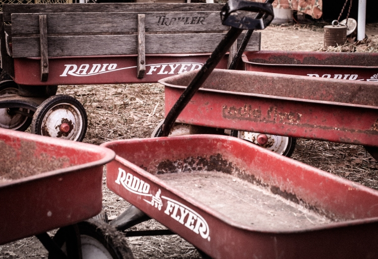 A bunch of red radio flyer wagons are gathered together at a pumpkin patch. Not So SAHM