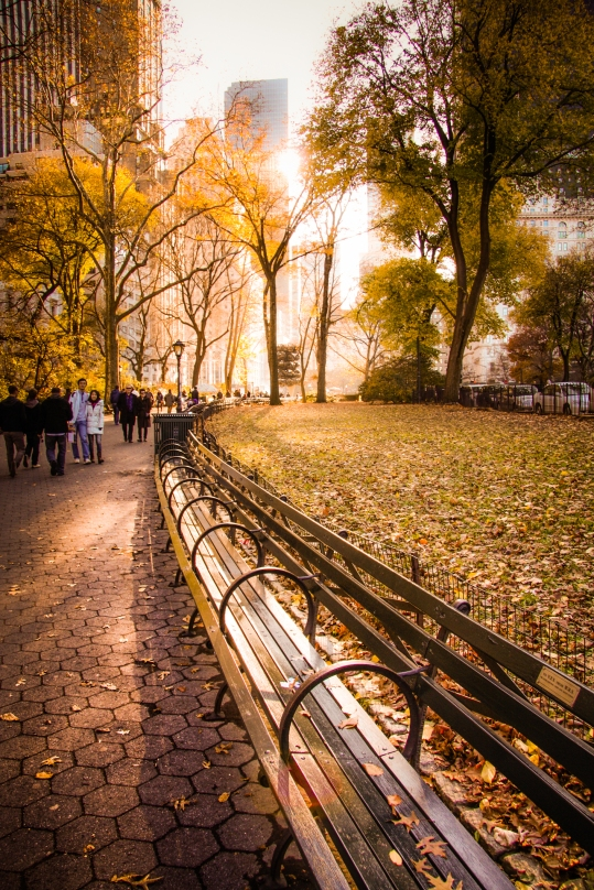 The sun sets behind golden leaves in Central Park. Not So SAHM