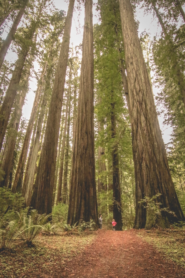 Two girls are dwarfed by the giant redwoods surrounding them. Not so SAHM
