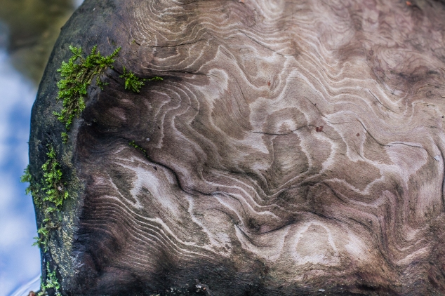 A piece of wood weathered by the water has beautiful patterns. Not So SAHM